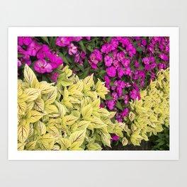 Flower Bed in Butchart's Garden Art Print