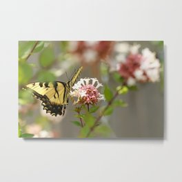 Swallowtail Sipping Nectar Metal Print