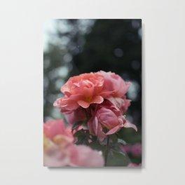 Roses and Raindrops: Peach Metal Print