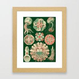 Ernst Haeckel Discomedusae Jellyfish Framed Art Print