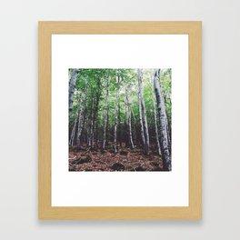 Uncharted Woods  Framed Art Print