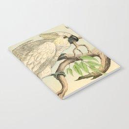 6 Birds Notebook