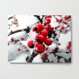 Bright Red Berries Metal Print