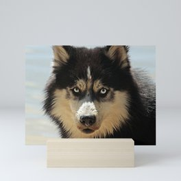 Husky Dog Breed Mini Art Print