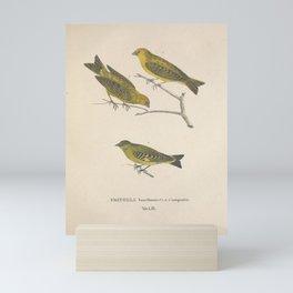 Vintage Illustration - Avium Novae (1825) - Brazilian Finch & Plain Finch Mini Art Print