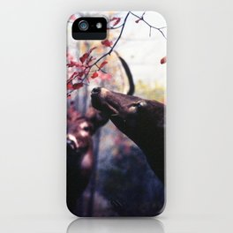 Delicacy iPhone Case