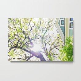 Sunlight through Oregon Trees Metal Print
