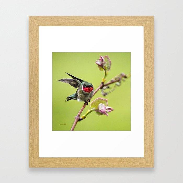 Hummingbird I Framed Art Print
