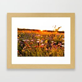Wildflower Sunset Framed Art Print