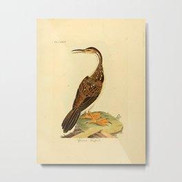 John Latham - A General History of the Birds, Vol 10 (1822) - African Finfoot Metal Print