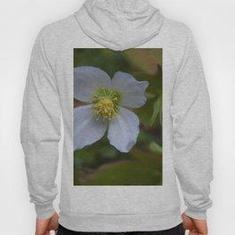 Floral Print 096 Hoody