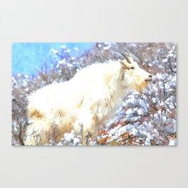 Mountain Goats In the Alpine Wyoming Mountain - Rocky Mountain Goat Canvas Print
