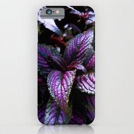 Persian Shield iPhone Case