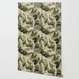 TEXTURES -- Munz's Cholla Wallpaper