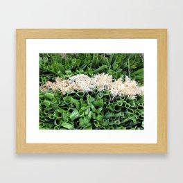 Green Onions are beautiful! Framed Art Print