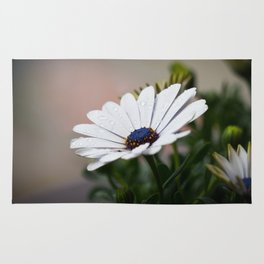 White Gerbera Flower Rug