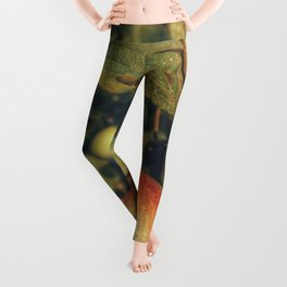 Apple taters Leggings