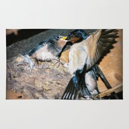 Swallow feeds chick. Rug