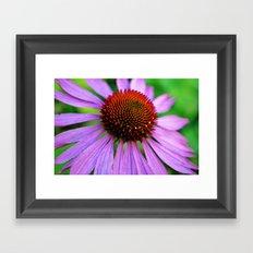 Purple Coneflower Framed Art Print