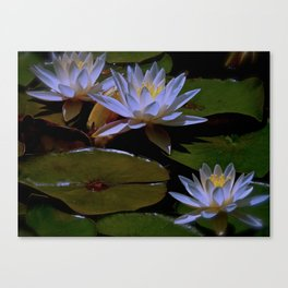 Luminous Water Lilies Canvas Print
