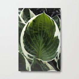 Hosta Leaf With Water Drop Metal Print