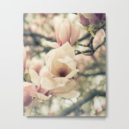 Magnolia Tree Bloom.  Flower Photography Metal Print