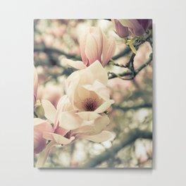 Magnolia Tree Bloom.  Flower Photography Metal Print