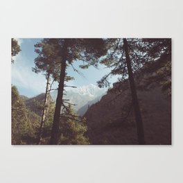 Pine trees against the Himalayan mountains, Nepal Canvas Print