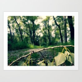 Forest Green Art Print