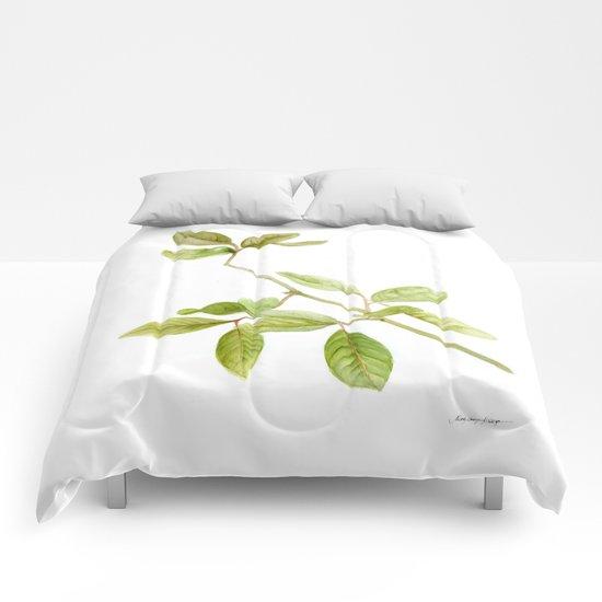 A branch of the tree Psidium fortium Comforters