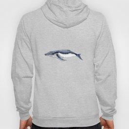 Humpback whale (Megaptera novaeangliae) Hoody
