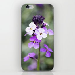 Dame's Rocket from Bud to Bloom iPhone Skin