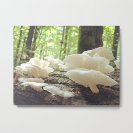 Loveliest Mushrooms Metal Print