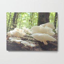 Loveliest Mushrooms Metal Print