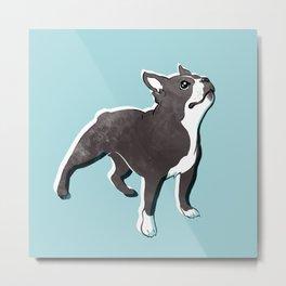 Boston Terrier 2 Metal Print