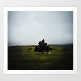 a lonely tree in iceland. Art Print
