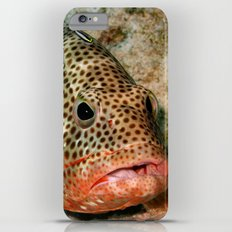 Coral Grouper Being Cleaned Slim Case iPhone 6 Plus