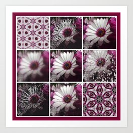 White and Magenta African Daisies Graphic Collage Art Print