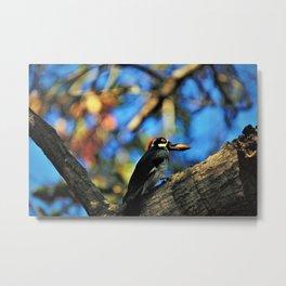 Gotcha! Autumn Woodpecker Metal Print
