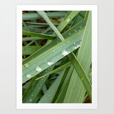 Grass and Rain Art Print