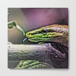 Animal ArtStudio 28516 Snake Metal Print