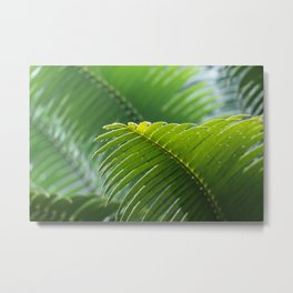 Tropical Palm Tree Leaf Metal Print