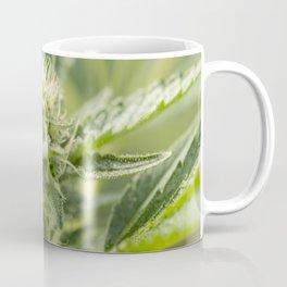 GSC Cannabis flowering Coffee Mug