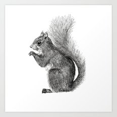 Squirrel in Pen Art Print