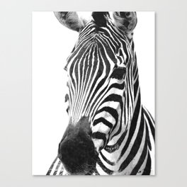 Black and white zebra illustration Canvas Print