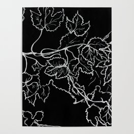 White ink, graphic, black cardboard, nature drawing maple leaves Poster