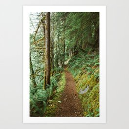 Mossy Trail through the Woods Art Print