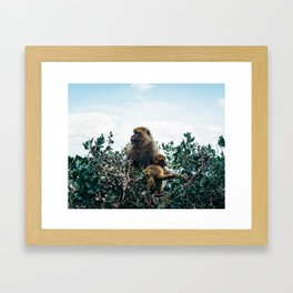 Macaque Mother and Daughter Framed Art Print