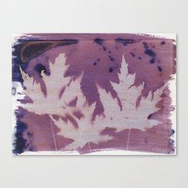 Cyanotype No. 11 Canvas Print