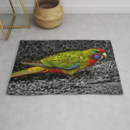 Green Rosella on Black and White Rug